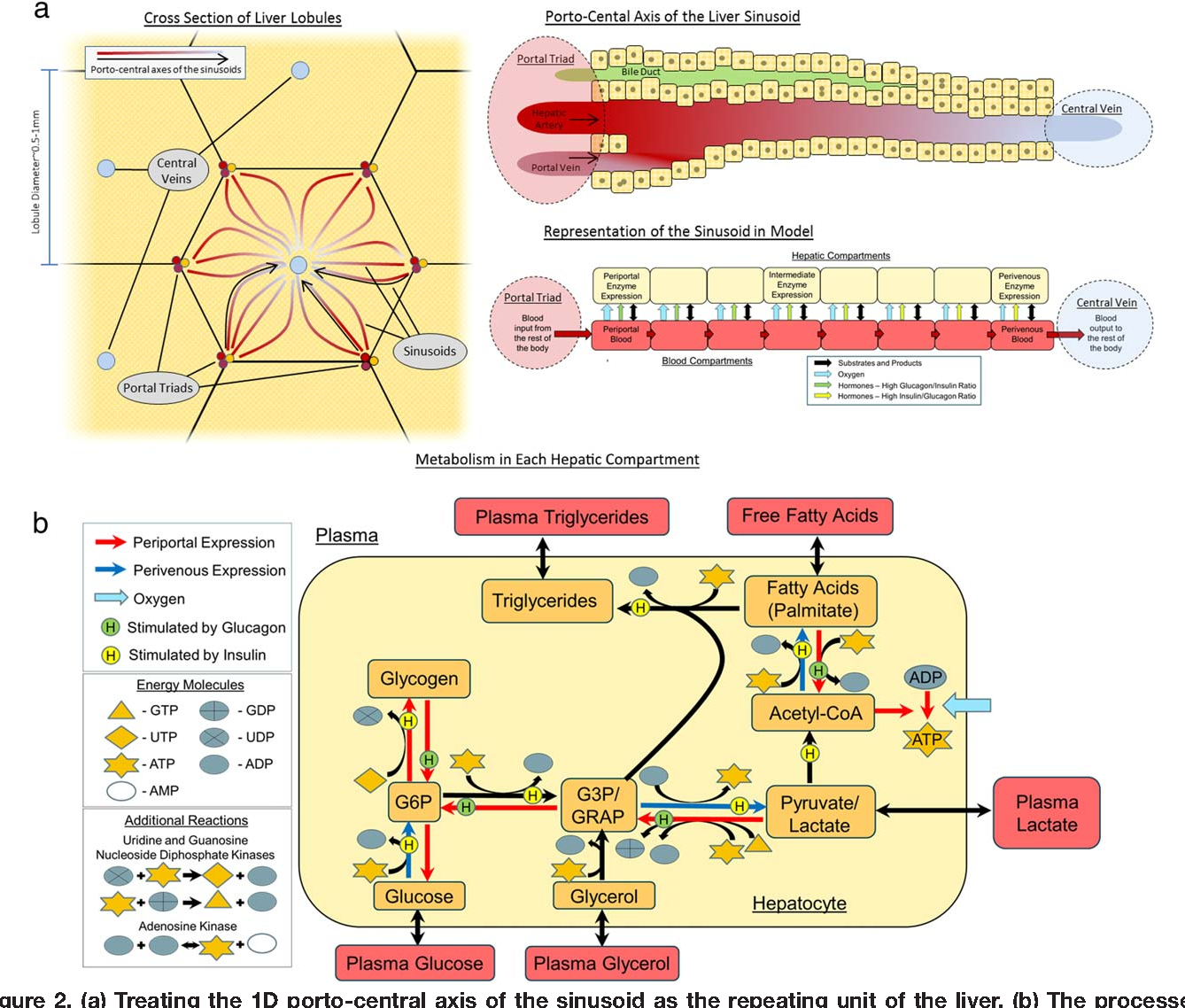 Figure 2 From Liver Function As An Engineering System Semantic Scholar