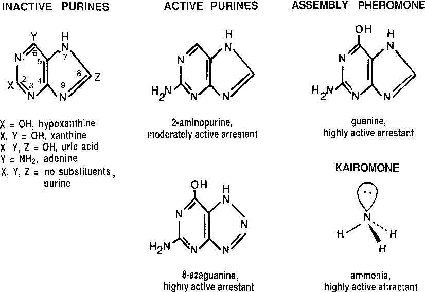 The adaptive function of ammonia and guanine in the