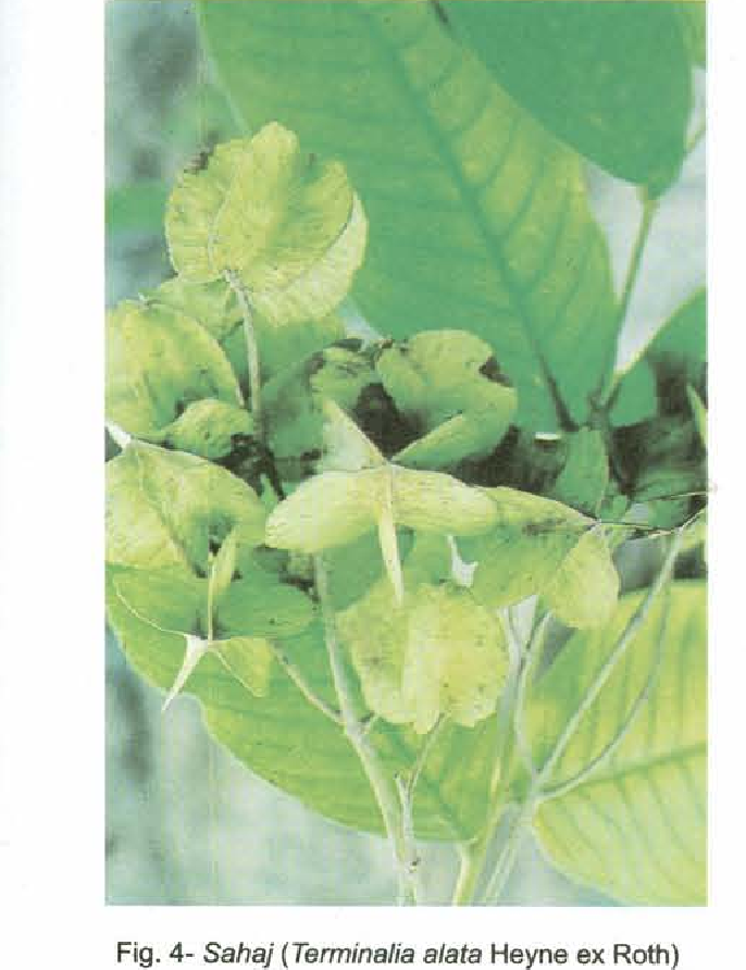 PDF] A sustainable use of phytodiversity by the Kandha tribe