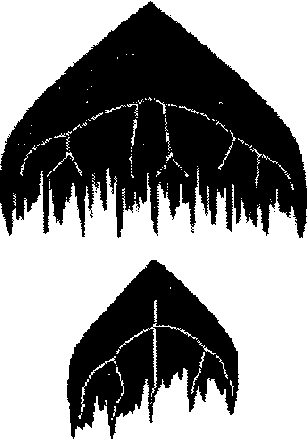 Fig. 6: The skeleton of the horizontal and vertical profiles, al scales 87 and 23, respectively. Note how the tips are indicative of where the most significant valleys are.