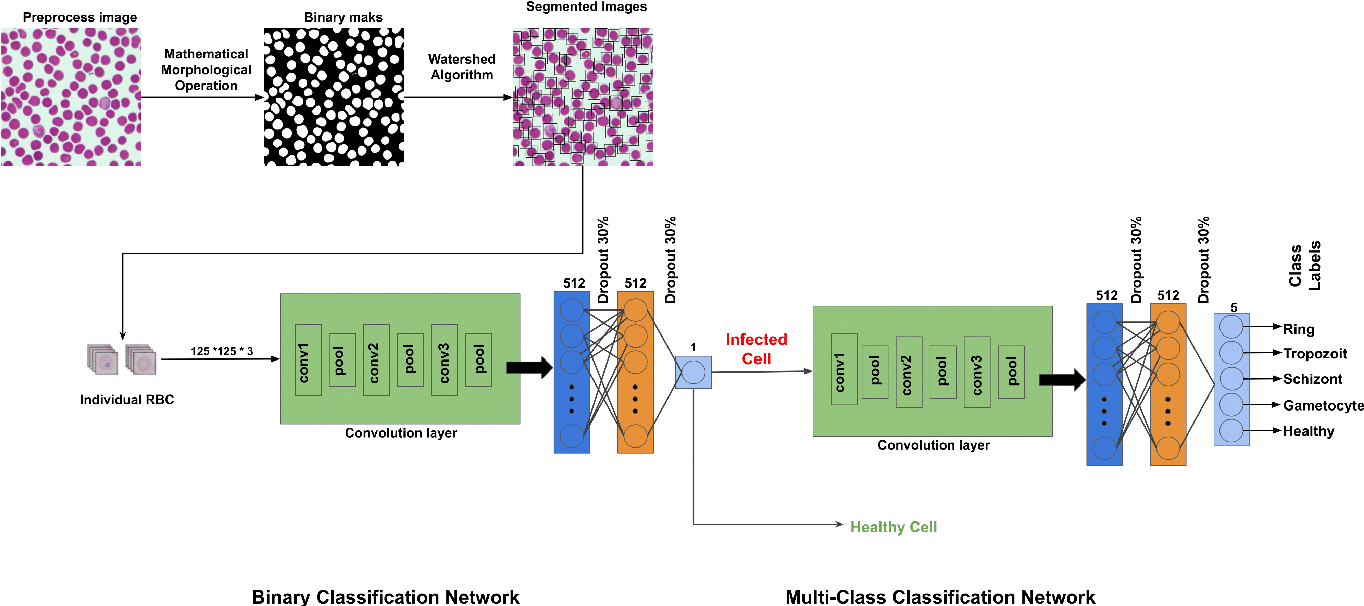 Figure 1 for A Dataset and Benchmark for Malaria Life-Cycle Classification in Thin Blood Smear Images