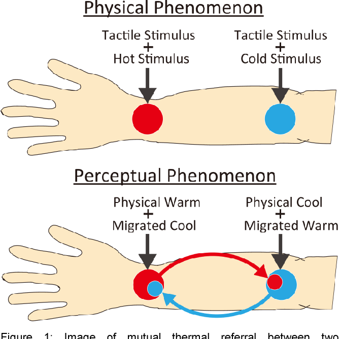 Figure 1: Image of mutual thermal referral between two contradictory thermal-tactile stimuli.