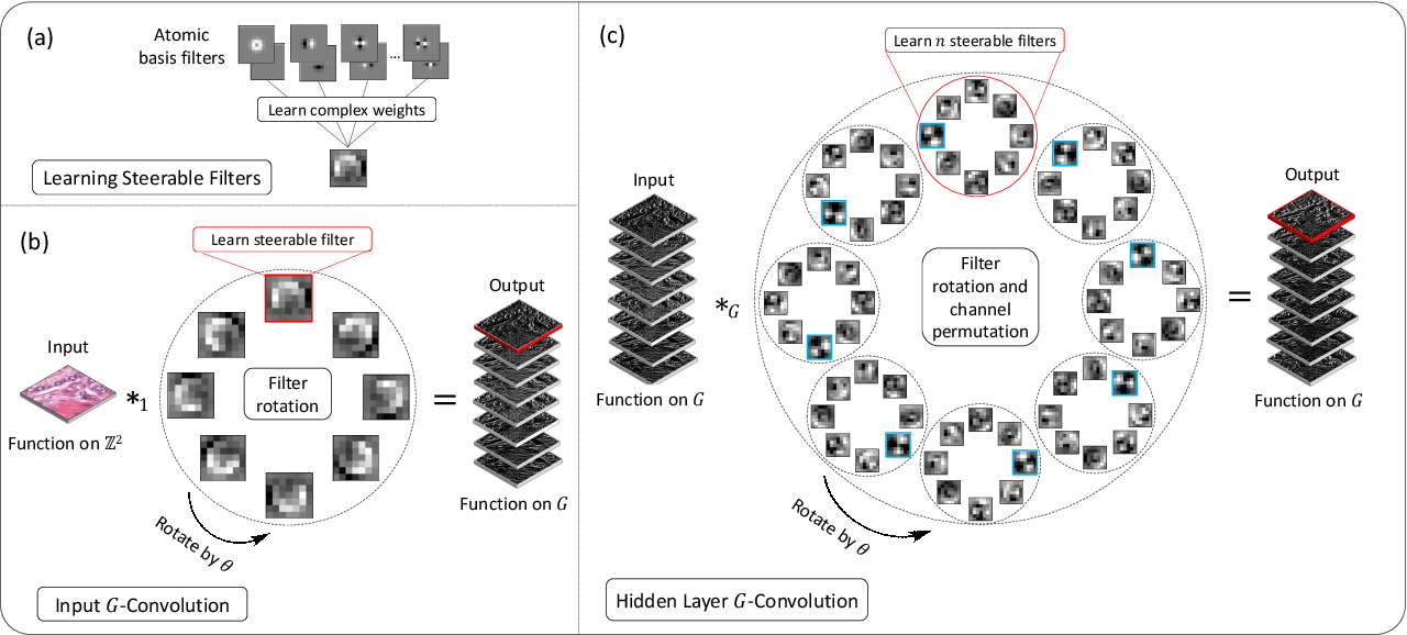 Figure 3 for Dense Steerable Filter CNNs for Exploiting Rotational Symmetry in Histology Images