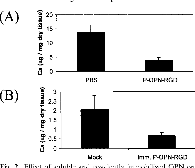 Fig. 2. Effect of soluble and covalently immobilized OPN on calcification of GFBP in OPN )/) mice. (A) Rescue with injected soluble OPN: about 72% inhibition of calcification by injected soluble OPN was obtained (P < 0.002). GFBP tissue was explanted at the day 7 time-point. Total number of OPN)/) mice used were n = 8. Bars indicate standard error. (B) Rescue with covalently immobilized OPN: calcification response for tissue with covalently immobilized OPN and the mock-treatment-controls. The explants were obtained at the day-7 time-point. The number of OPN)/) mice used were n = 4. Bars indicate standard error.