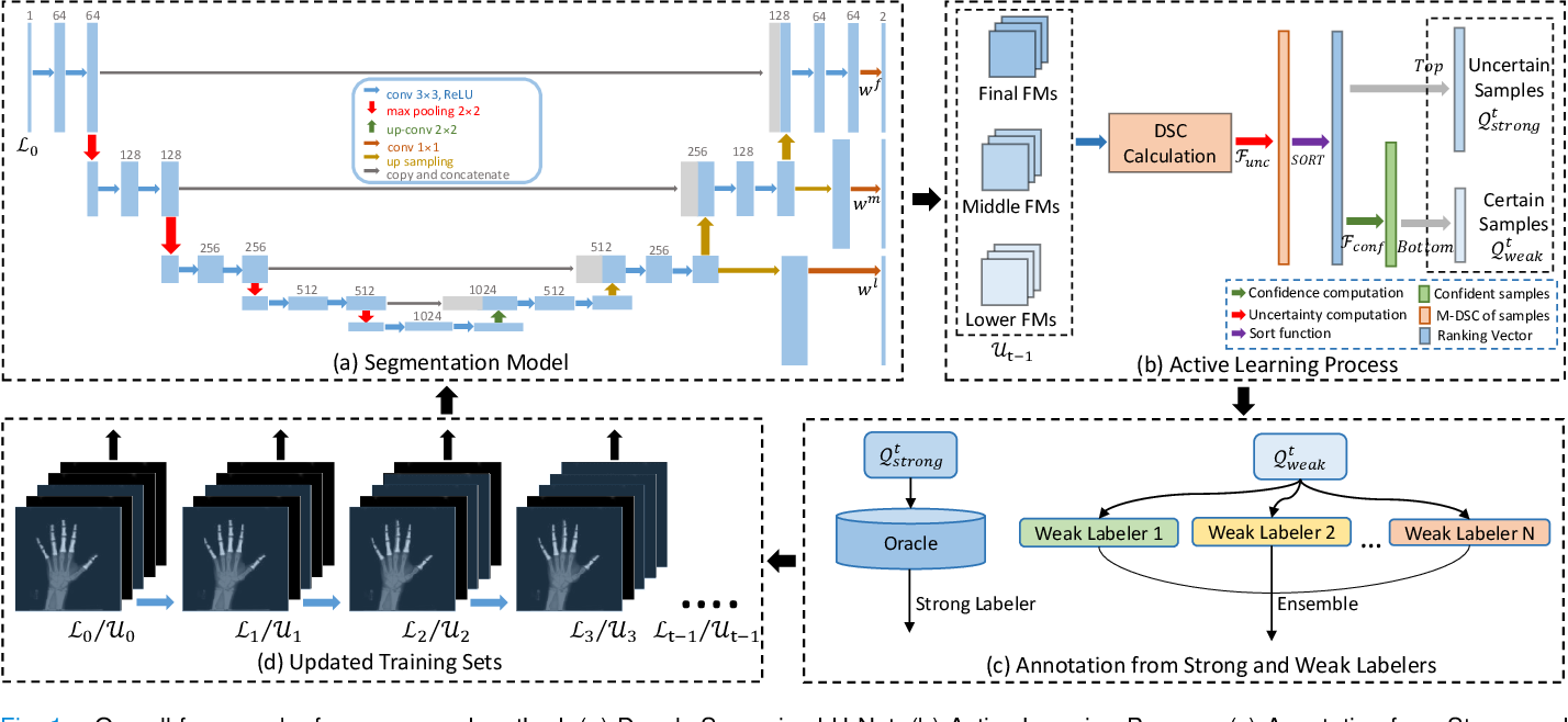 Figure 1 for DSAL: Deeply Supervised Active Learning from Strong and Weak Labelers for Biomedical Image Segmentation