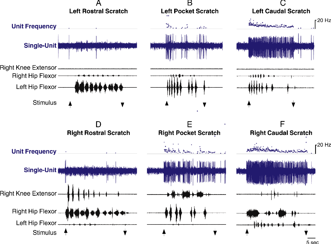 Broadly Tuned Spinal Neurons For Each Form Of Fictive Scratching In