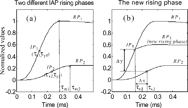 Modeling fibrillation Potentials-a new analytical description for