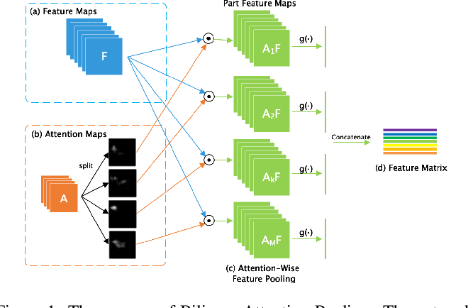 Figure 1 for Weakly Supervised Local Attention Network for Fine-Grained Visual Classification