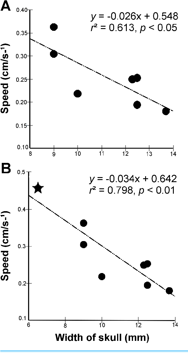 Figure 3 Excavatory cycle speed as a function of width of skull in Leposternon individuals. (A) Analysis restricted to L. microcephalum. (B) Analysis after insertion of L. scutigerum, represented by the star.