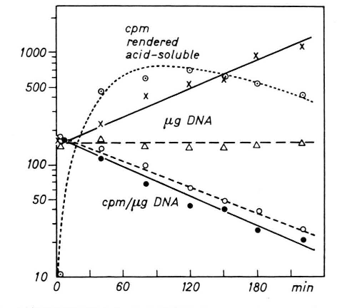 Figure 3 from DNA turnover in growing yeast after X