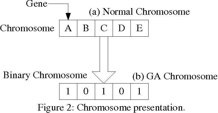 Figure 2: Chromosome presentation.