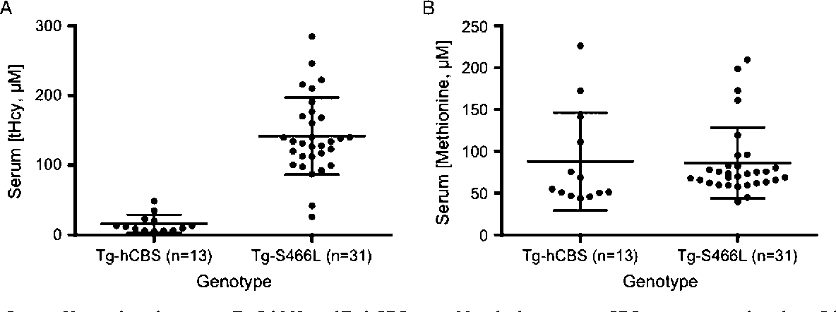 FIGURE 1. Serum tHcy and methionine inTg-S466L andTg-hCBS mice. Mice lacking mouse CBS containing either the p.S466L or wild-type human CBS transgene were induced with zinc water for 10 days. Serum was then collected and analyzed for tHcy and methionine. A: Distribution of tHcymeasurements. Dots indicate individual animals. Lines indicate average and standard deviation. The di¡erence between the distributions is highly signi¢cant (Po0.0001). B: Distribution of serummethionine concentrations.
