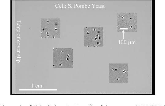 Fig. 2. The entire field-of-view (~10 cm2) of the captured LUCAS image is illustrated. Zoomed LUCAS images are also shown to demonstrate the shadow signatures corresponding to S. Pombe Yeast cells.
