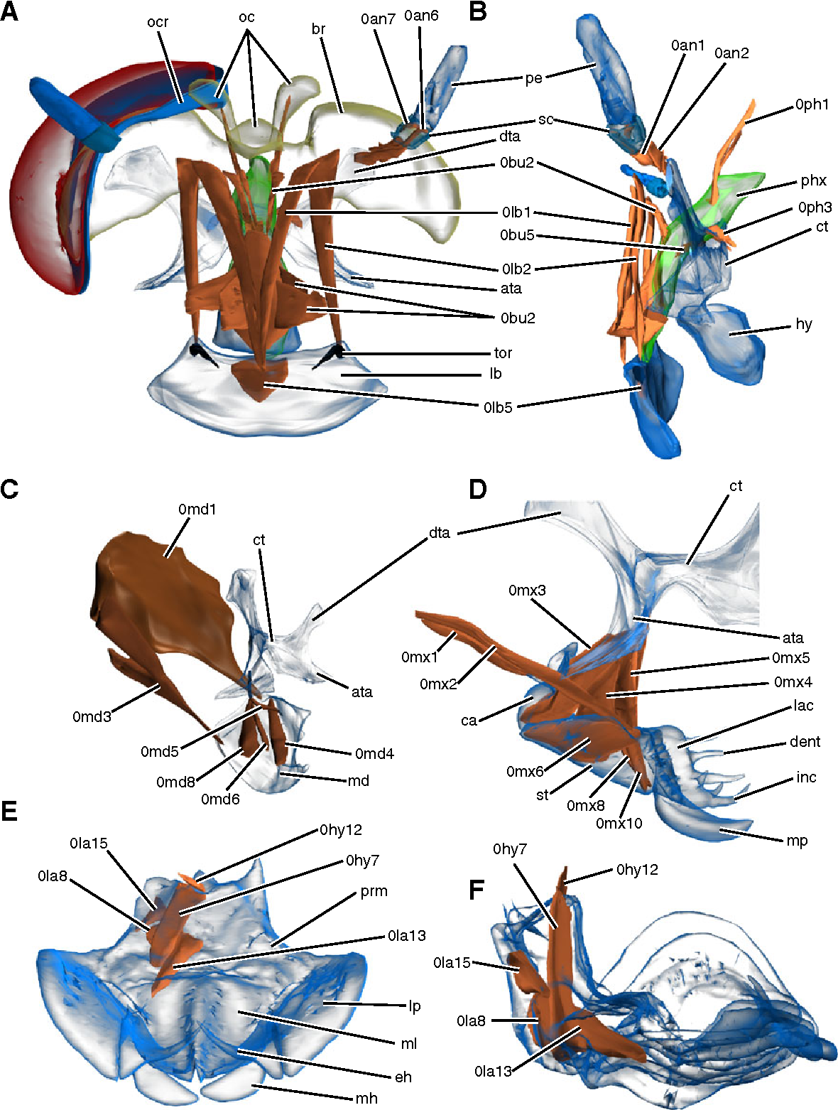 Figure 3 from The head anatomy of Epiophlebia superstes (Odonata ...