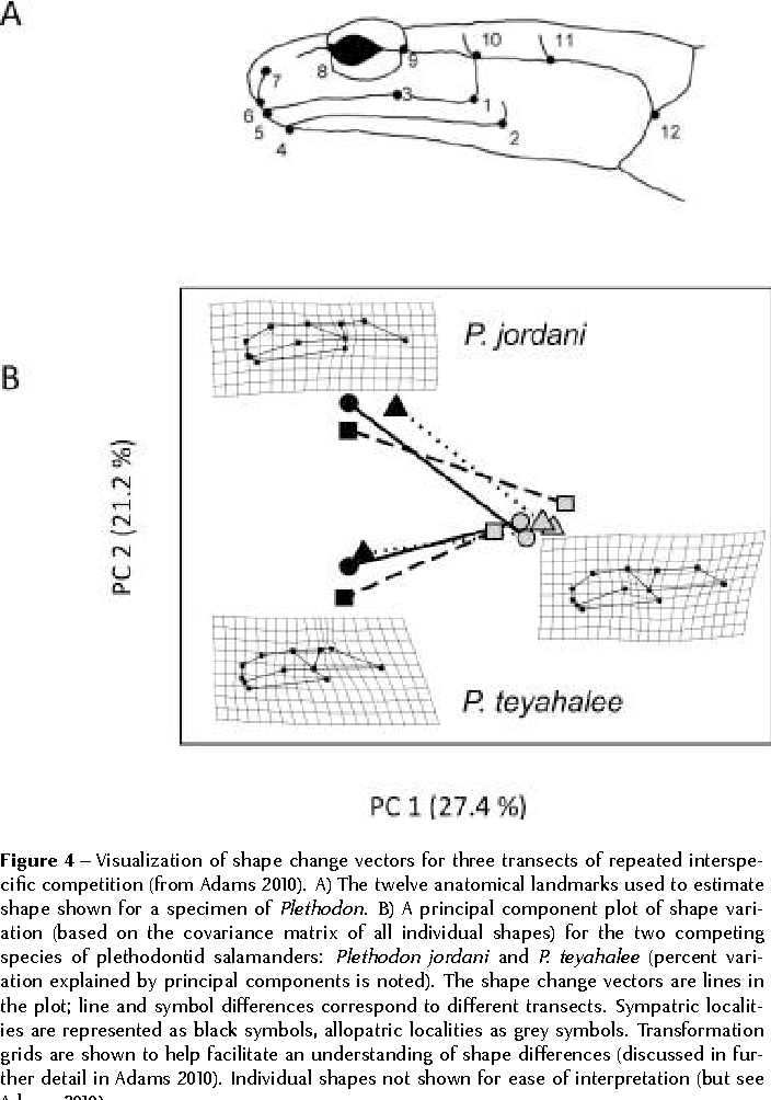 Figure 4 from phenotypic trajectory analysis comparison of shape figure 4 visualization of shape change vectors for three transects of repeated interspecific competition ccuart Image collections