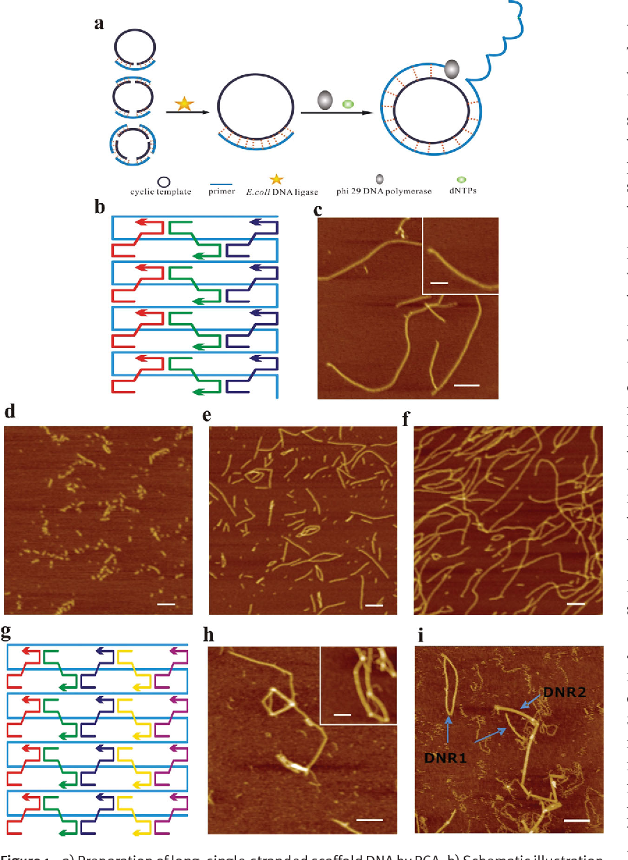 Rolling circle amplification-based DNA origami nanostructrures for ...
