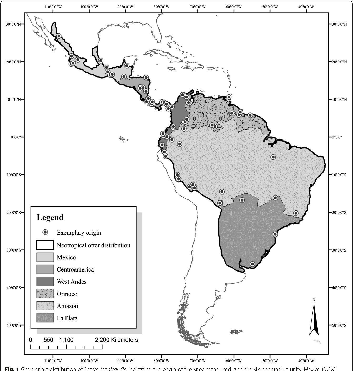 Morphological Variability Of The Cranium Of Lontra Longicaudis