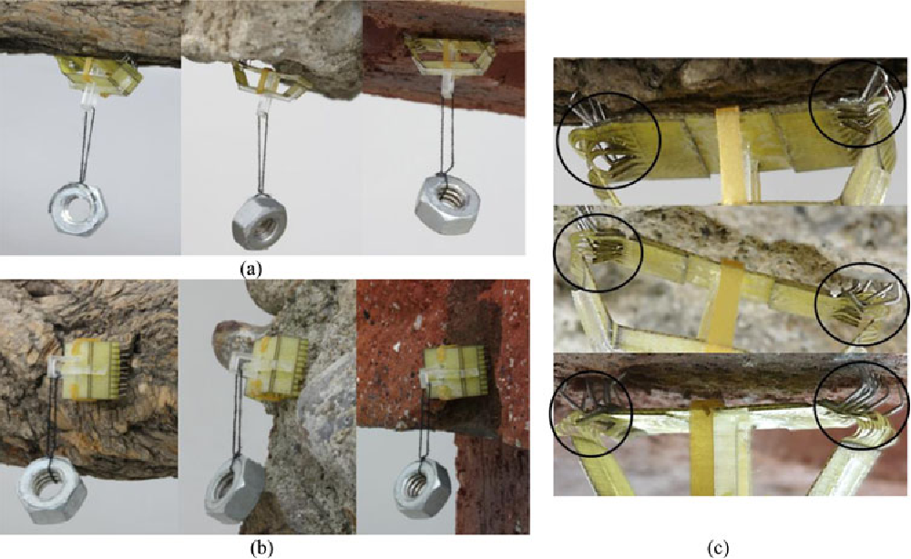 Fig. 14. (a), (b) Buckling gripper attached to a tree, stone, and brick. (c) Magnified images of (a).