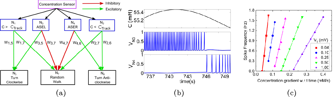 Figure 2 for Sub-threshold CMOS Spiking Neuron Circuit Design for Navigation Inspired by C. elegans Chemotaxis