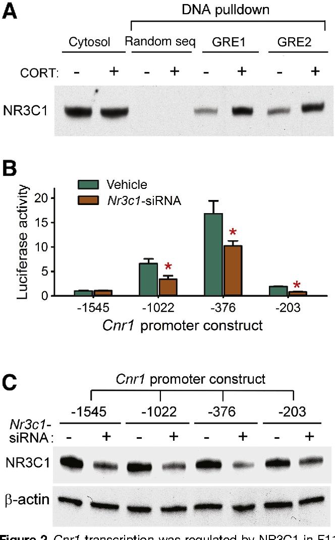 Epigenetic Regulation Of Genes That Modulate Chronic Stress Induced