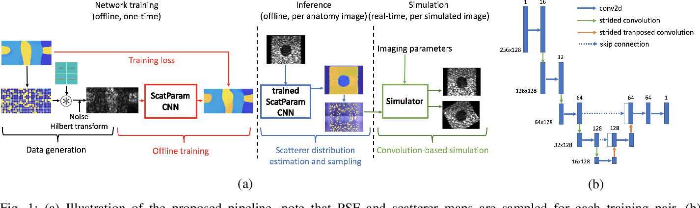 Figure 1 for Deep Network for Scatterer Distribution Estimation for Ultrasound Image Simulation