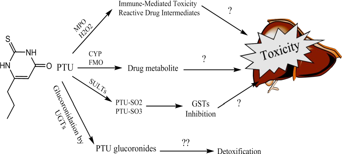 Elucidating mechanisms of drug induced toxicity