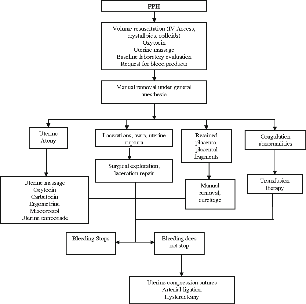 A local hemostatic agent for the management of postpartum figure 1 pooptronica Choice Image