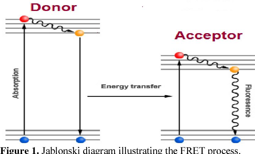 Figure 1 from fluorescence resonance energy transfer fret sensor jablonski diagram illustrating the fret process ccuart Gallery
