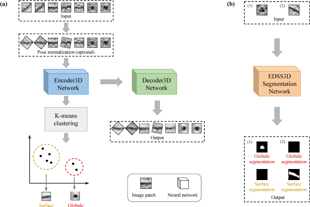 Figure 1 for A convolutional autoencoder approach for mining features in cellular electron cryo-tomograms and weakly supervised coarse segmentation