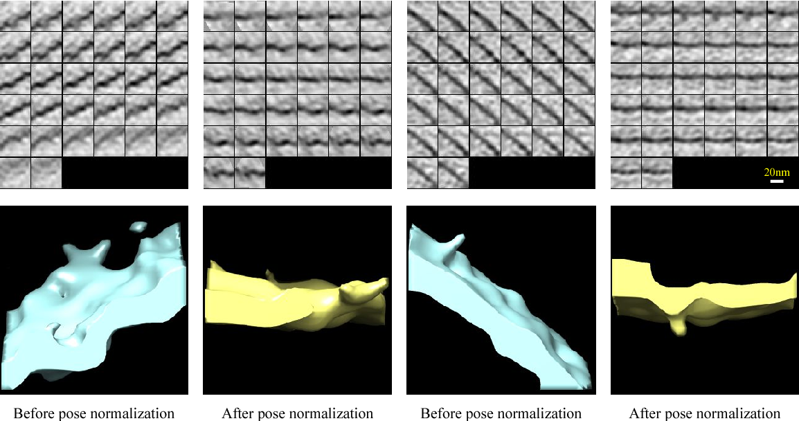 Figure 3 for A convolutional autoencoder approach for mining features in cellular electron cryo-tomograms and weakly supervised coarse segmentation