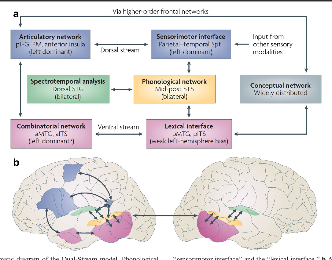 A cortical circuit for voluntary laryngeal control implications for figure 1 ccuart Images