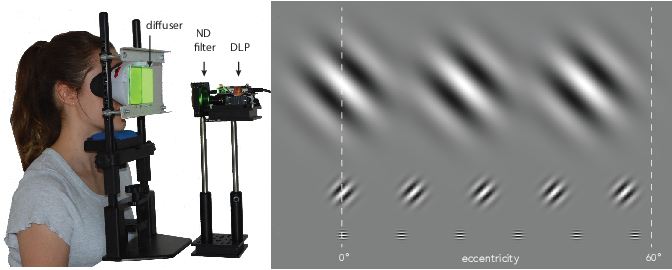 Figure 3 for A Perceptual Model for Eccentricity-dependent Spatio-temporal Flicker Fusion and its Applications to Foveated Graphics