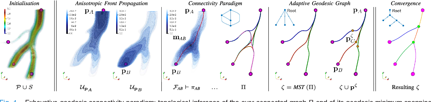 Inference of Cerebrovascular Topology With Geodesic Minimum Spanning