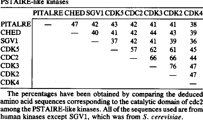Table 1. Percent amino acid sequence identity of PSTAIRE-like kinases