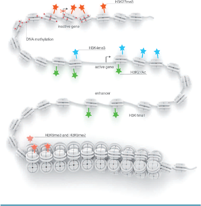 Figure 1 from blueprint mapping human blood cell epigenomes figure 1 malvernweather Choice Image
