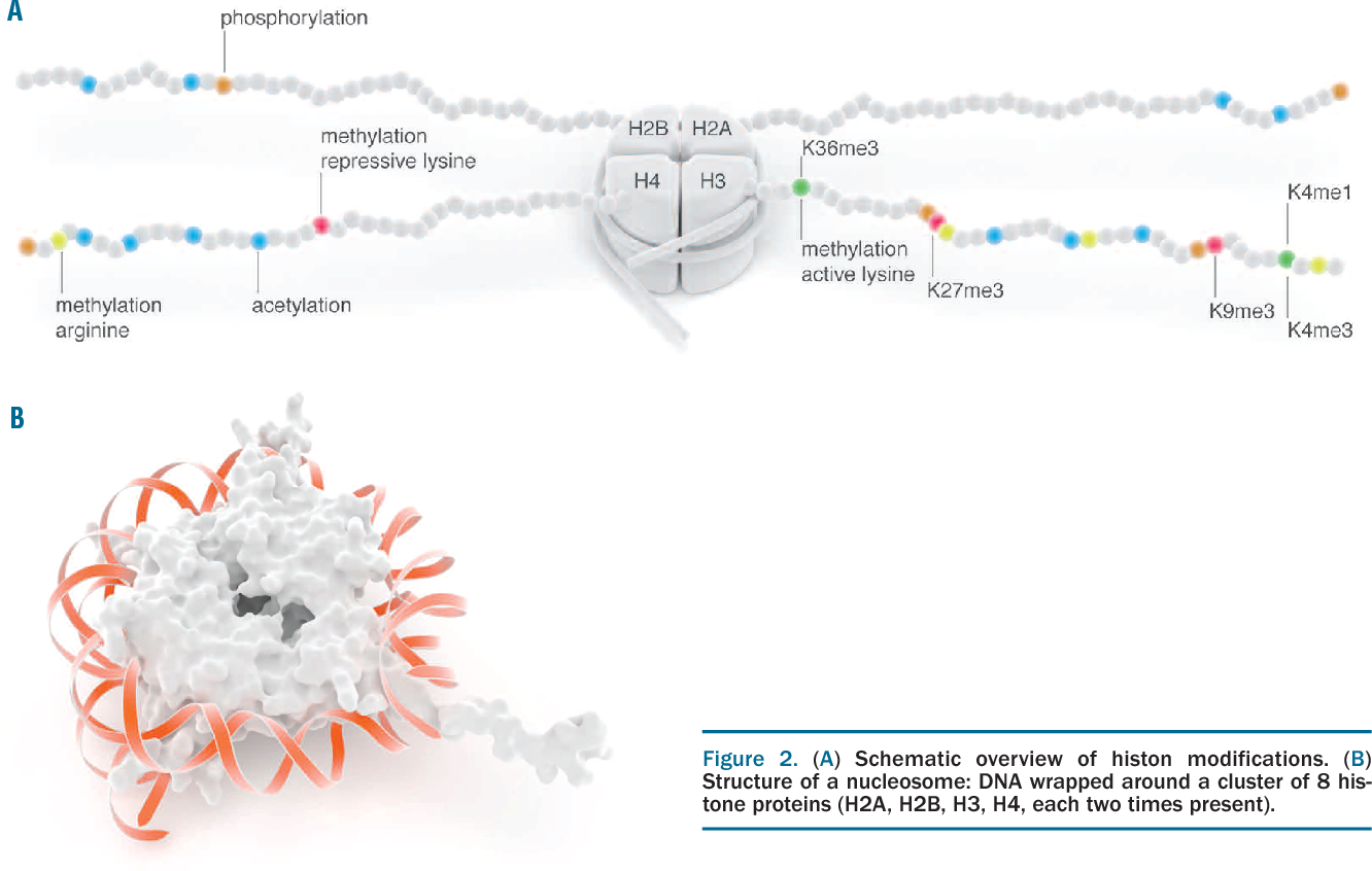 Figure 2 from blueprint mapping human blood cell epigenomes figure 2 malvernweather Choice Image