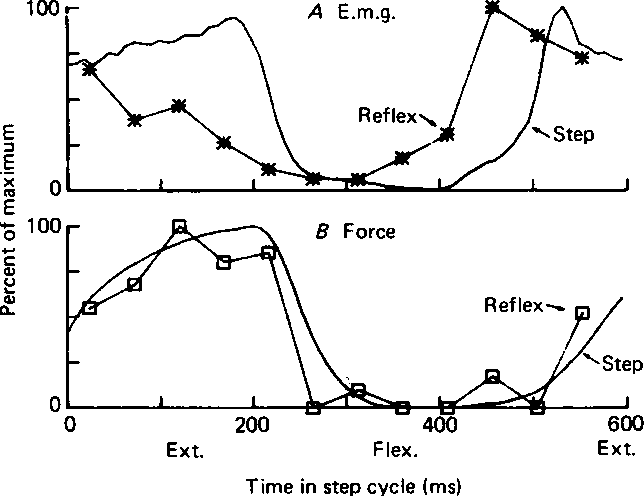 Modulation Of Stretch Reflexes During Locomotion In The