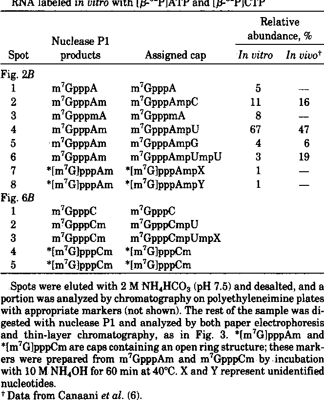 Table 1. Analysis of RNase T2-resistant caps derived from SV40 RNA labeled in vitro with [/3-32P]ATP and [f3-32P]CTP