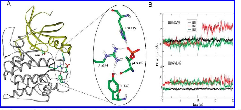 Molecular Dynamics Simulations and Elastic Network Analysis of