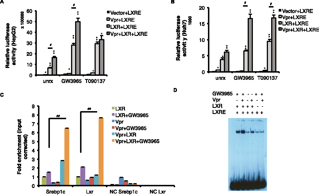 Vpr Binds To LXR And Enhances LXRE Dependent Promoter Activity