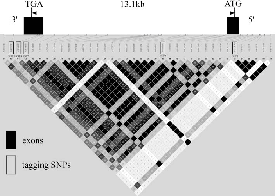 Fig. 2 LD evaluation and tagging SNPs in PROKR2 ATG is the start codon and TGA is the stop codon. Vertical bars represent exons. Tagging SNPs selected from the HapMap database are represented by black boxes. Color scheme is based on r2 value. Other information can be seen at the Haploview website
