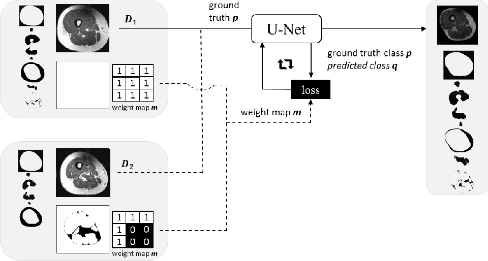 Figure 1 for Combining Heterogeneously Labeled Datasets For Training Segmentation Networks