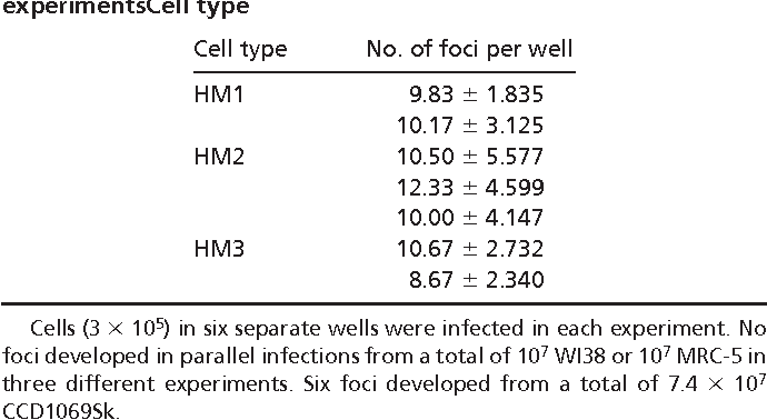 Table 1. Focus assay after infection of HM with SV40 in separate experimentsCell type