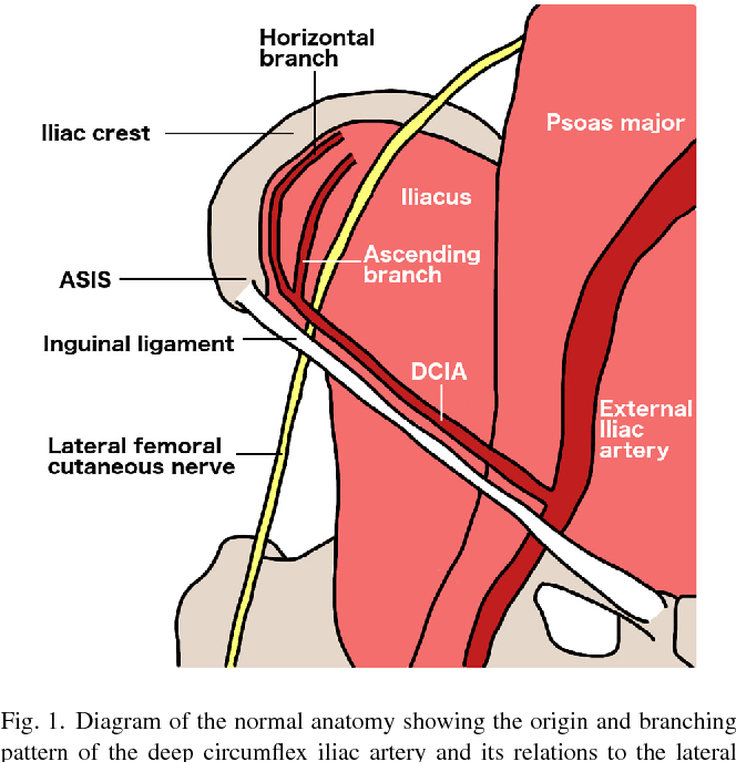Variation in the site of the lateral femoral cutaneous nerve during ...