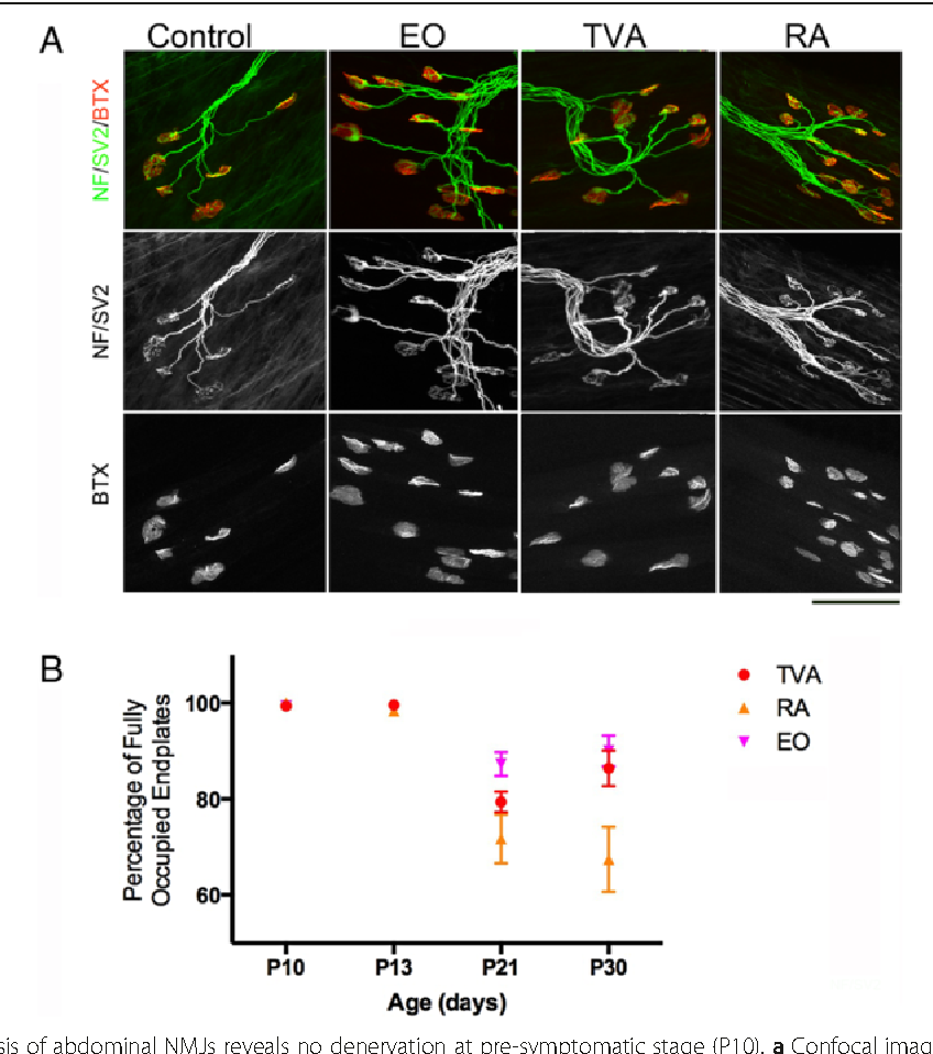 Transcriptional profiling of differentially vulnerable motor neurons figure 2 ccuart Image collections