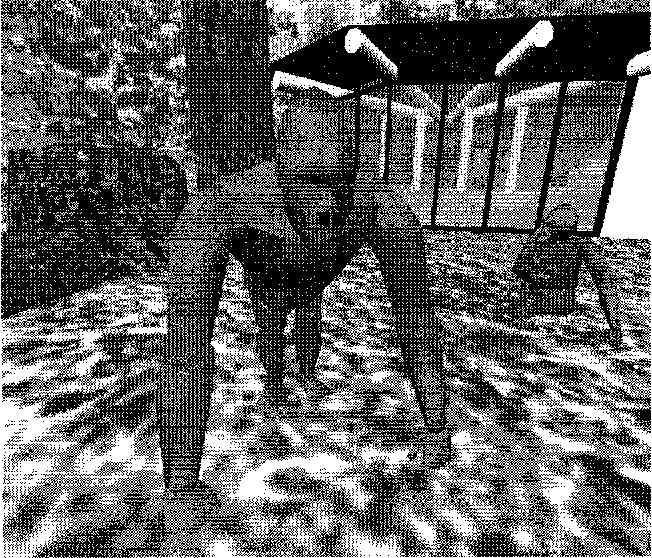 Figure 1: Virtual gorillas in the virtual habitat