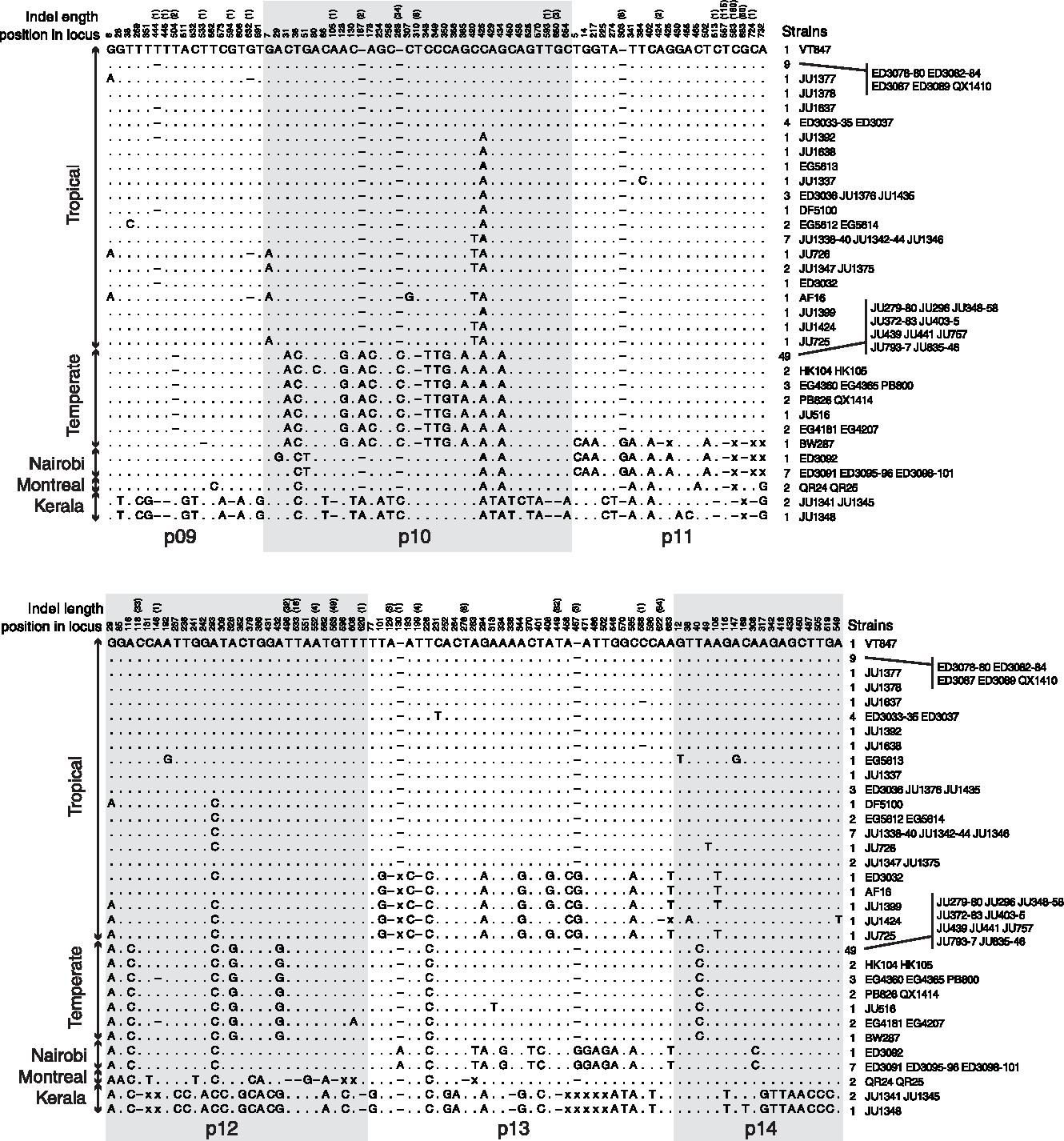 Figure 1 from Molecular population genetics and phenotypic