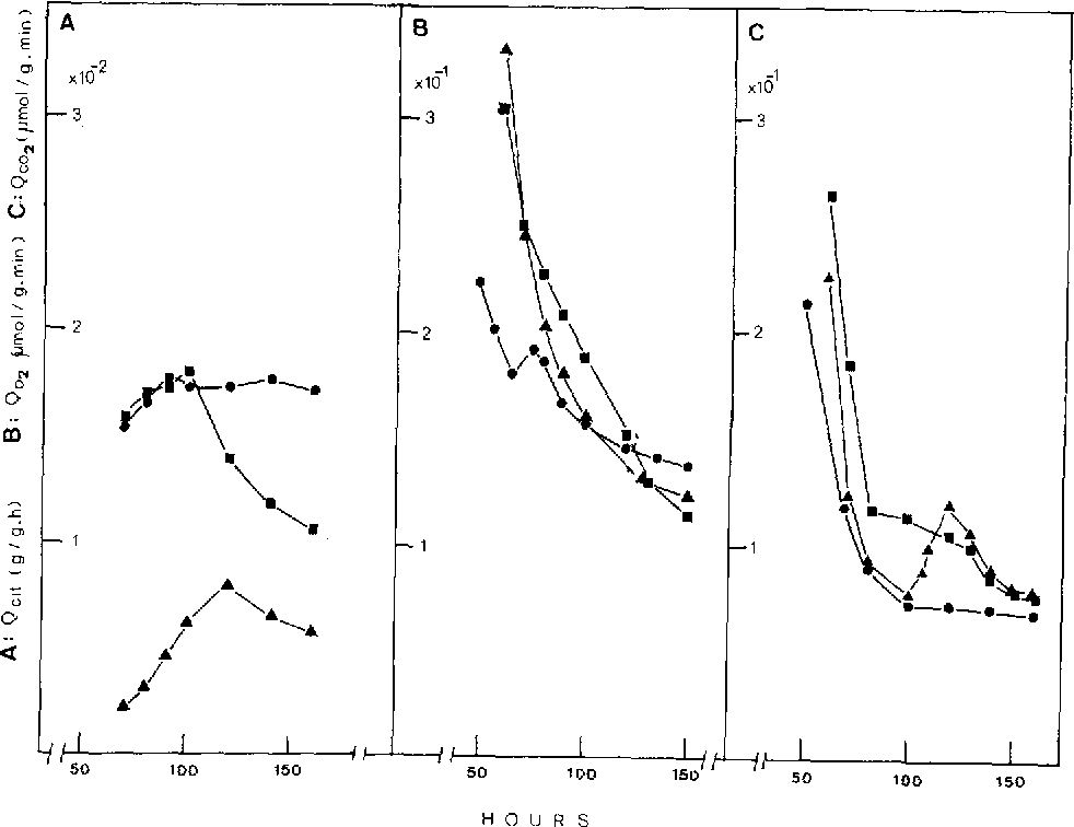 Fig. 3 A-C. Specific rates of citric acid accumulation (A), oxygen uptake (B) and carbon dioxide evolution (C) during citric acid fermentation under varying degrees of aeration. Symbols are as in Fig. 1.