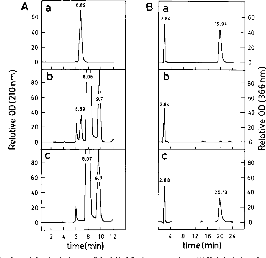 FIG. 1. Identification of oxalate and glyoxylate in the extracellular fluid of C. subvermispora cultures. (A) Underivatized samples were analyzed by ion exclusion HPLC, and elution profiles were determined for oxalate (a), extracellular fluid from day 6 cultures (b), and culture fluid after treatment with oxalate oxidase (c). Major peaks of the profile (8.06 and 9.7 min) were also detected with uninoculated cultures. (B) Samples were derivatized with 2,4-dinitrophenylhydrazine for reverse-phase HPLC analysis of glyoxylate (a), uninoculated growth medium (b), and extracellular fluid of day 9 cultures (c). OD (210 nm), optical density at 210 nm; OD (366 nm), optical density at 366 nm.