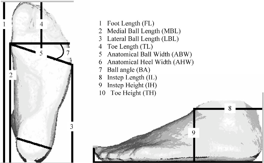 Figure 1 From Sex Related Differences In Foot Shape Semantic Scholar
